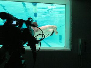 swimming-